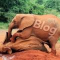 la pesada carga de utilizar la palabra blog